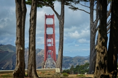 The Golden Gate in the trees.